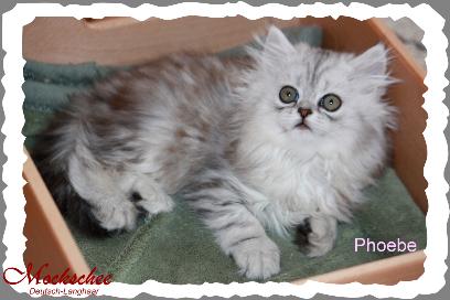 Phoebe 9. Woche