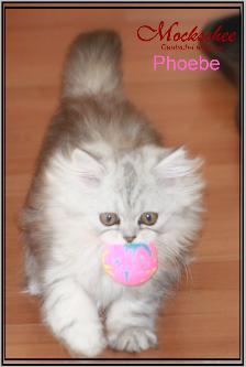 Phoebe 11.Wo