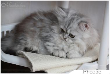 Phoebe 11 Woche