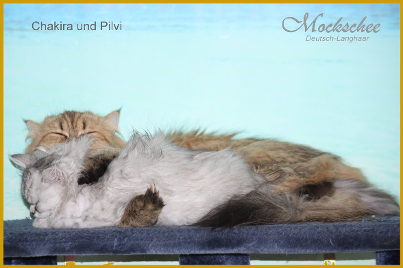 Chakira und Pilvi