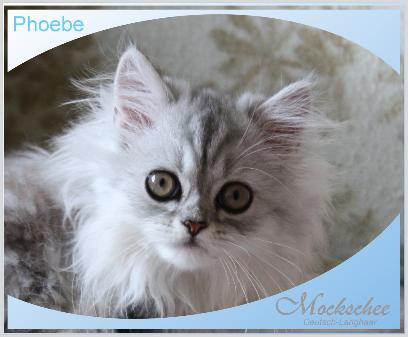 Phoebe 12. Woche