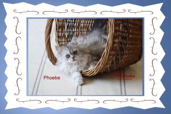 Phoebe 14. Woche