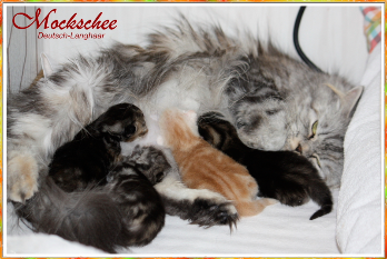 Ida mit Babys 1 Woche alt