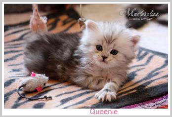 Queenie 5. Woche