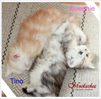 Tino und Queenie