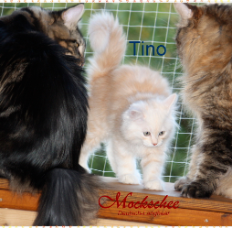 Tino sucht noch ein neues Zuhause
