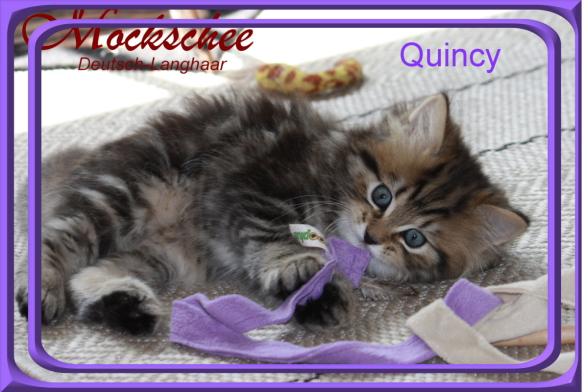 Quincy 7 Wo