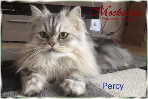 Percy 1 Jahr