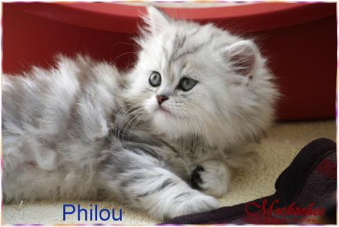 Philou 8 Wochen