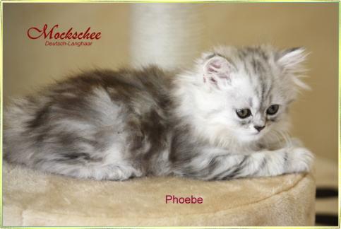 Phoebe 7 Wochen