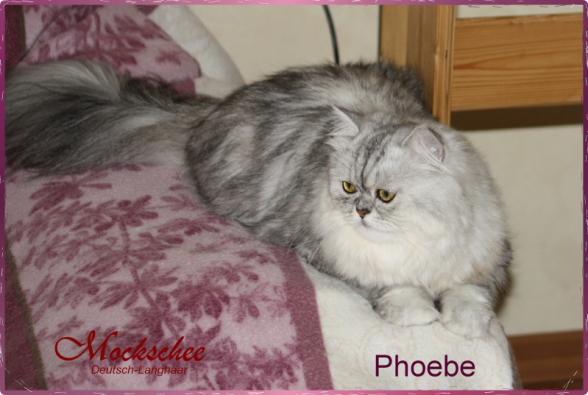 Phoebe 1 Jahr