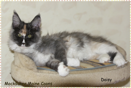Daisy 15 Wochen