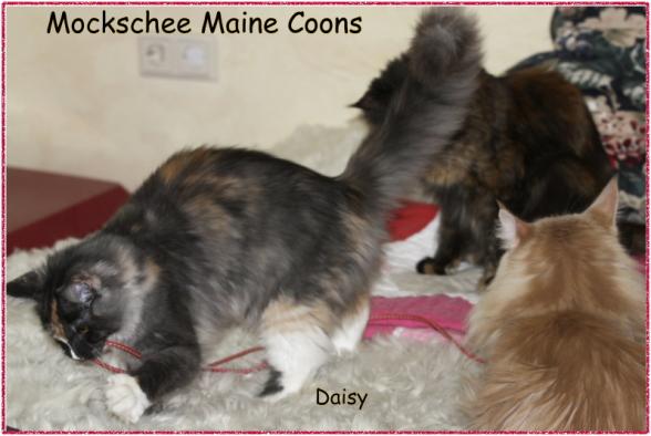 Daisy 4,5 Monate