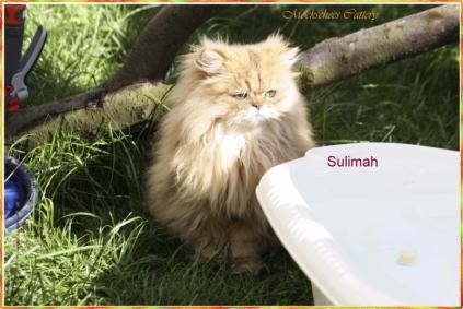 Sulima 14 Monate