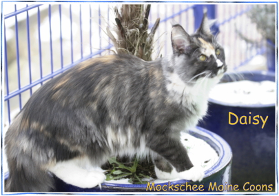 Daisy 7 Monate