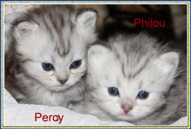 Percy und Philou