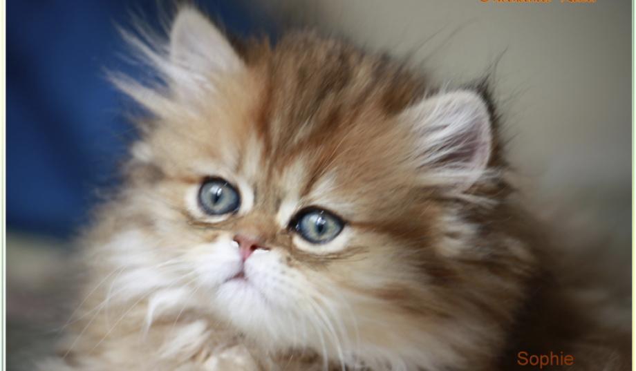 Katzenkauf auf dem wültisch